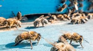 W przyrodzie ruszyła wegetacja a pszczoły zaczęły opuszczać ule