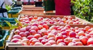 Czechy: Rekordowe zbiory jabłek i gruszek w 2015 r.