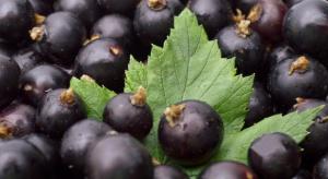 Jedzenie czarnych porzeczek chroni przed cukrzycą