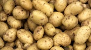 Straty plonu ziemniaka mogą sięgać nawet 70 proc.