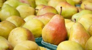 Spadają ceny gruszek w Belgii