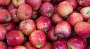 Appolonia ma już pierwsze kontrakty na dostawę jabłek do Chin