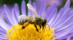 Syngenta rusza z kolejną akcją na rzecz owadów zapylających