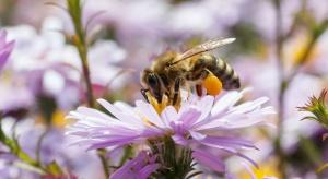 BASF Polska oprócz 'tworzenia chemii' wspiera bioróżnorodność