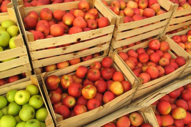 Będzie poprawa sytuacji na rynku jabłek?