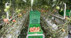 Polskie Pomidory wdrożyły informatyczny system do zarządzania firmą