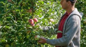 Więcej młodych rolników, którzy ubiegali się o premię w 2015 r., może liczyć na wsparcie