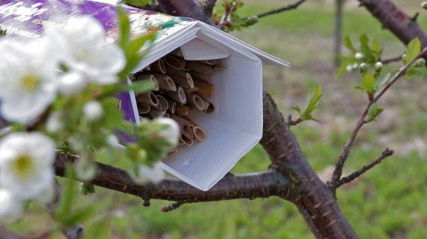 Sumi Agro rusza z kolejną akcją na rzecz owadów zapylających