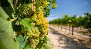 Nowe rozwiązanie w ochronie jabłoni, grusz i winorośli przed chwastami