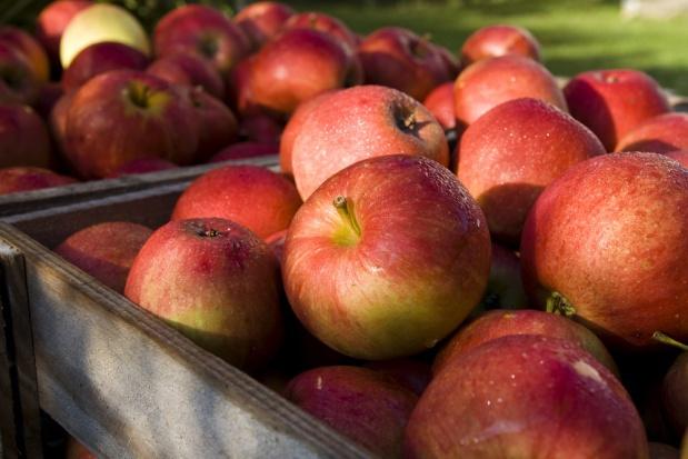 Wycofanie z rynku jedyną szansą na sprzedanie jabłek po atrakcyjnych cenach?