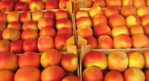 Unijny handel jabłkami w drugiej połowie 2015 r. – analiza BGŻ BNP Paribas