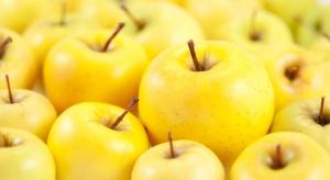 Golden Delicious to najpopularniejsza odmiana jabłek na Ukrainie