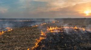 Strażacy apelują o niewypalanie traw. Rolnicy mogą stracić dopłaty unijne