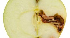 Nowość w ochronie jabłoni i grusz przed owocówką jabłkóweczką