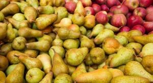Wysoki poziom zapasów jabłek i gruszek w unijnych magazynach