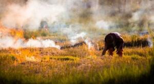 ARiMR apeluje: Nie wypalaj traw!