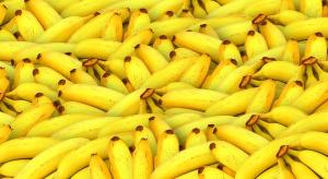Uprawy bananów zagrożone przez groźną chorobę grzybową