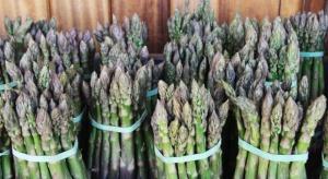 Trudny początek sezonu szparagowego. Przymrozki zniszczyły część zbiorów (zdjęcia)