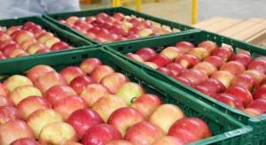 Rekordowy poziom zapasów jabłek. Winny niski popyt eksportowy
