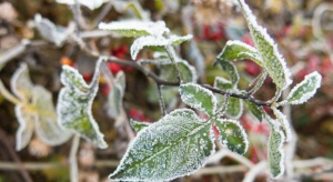 Przymrozki nadejdą wraz z zimną Zośką i potrwają kilka dni