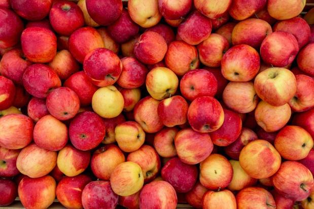 Włochy liderem w ilości przechowywanych jabłek. Polska na drugim miejscu