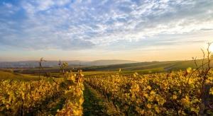 Ponad połowa podkarpackich winnic przyjmuje turystów