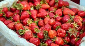 W Rosji zniszczono 12 ton ukraińskich truskawek i blisko tonę polskich jabłek