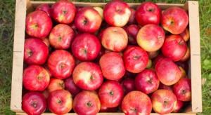 Białoruś stała się liderem w imporcie jabłek z Ukrainy