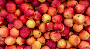 Zapasy jabłek są o 30 proc. wyższe niż przed rokiem, a ceny 50 proc. niższe