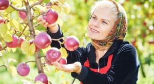 Wdrożenie dyrektywy sezonowej pozwoli określić ilu cudzoziemców pracuje sezonowo