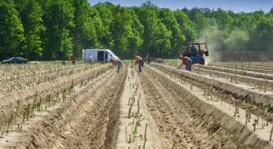 Niemcy: Wzrasta areał upraw warzyw gruntowych. Dominują szparagi