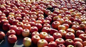 Rynek jabłek: Tegoroczny handel jest bardzo ciężki