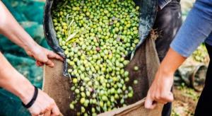 Włochy: Ostre kary za fałszerstwa przy produkcji oliwy