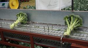 Syngenta prezentuje projekt EasyBroQ oraz nowoczesne technologie uprawy brokułów