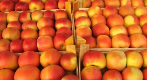 Rosja: Polskie jabłka niszczone nawet nad Morzem Japońskim
