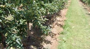 Belchim wprowadza herbicyd dla jabłoni, gruszy oraz winorośli