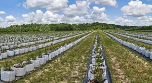 Dar Blue planuje dalsze inwestycje w plantacje borówek w Chorwacji