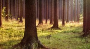 ARiMR: 1 sierpnia mija termin składania wniosków o wsparcie na zalesianie