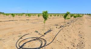 IUNG: Nie ma suszy w uprawach polowych
