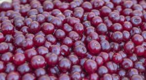 Mazowsze: Ceny wiśni w skupach wahają się między 0,8-1,1 zł/kg
