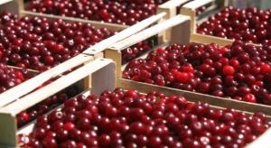Niskie ceny wiśni wynikiem zmowy? UOKiK zbada sprawę