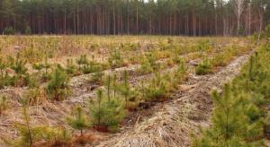 Rolnicy zainteresowani zalesianiem. Do ARiMR wpłynęło 860 wniosków
