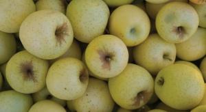 Ceny jabłek wczesnych odmian wahają się między 1-2,8 zł/kg
