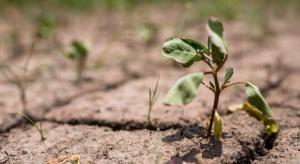 IUNG: Nie ma zagrożenia suszą w uprawach polowych