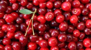 Mazowsze: Wiśnie skupowane nawet za 0,6 zł/kg