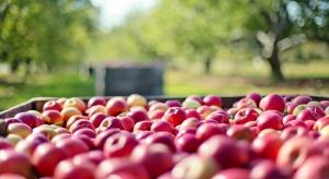 Samorządowcy z Grójecczyzny apelują do przetwórców owoców