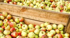 Niskie ceny jabłek przemysłowych. Wahają się między 20-23 gr/kg