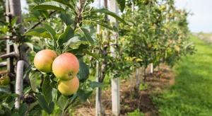 Nowe rozwiązanie w ochronie jabłoni przed parchem