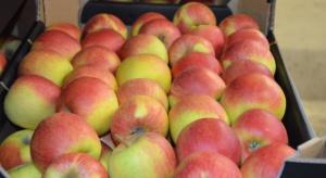 Zwiększył się wolumen eksportu jabłek z Polski na rynki pozaunijne
