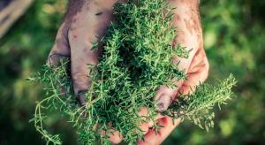 Udany rok dla plantatorów ziół na Lubelszczyźnie